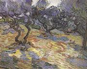 Olive Trees:Bright Blue Sky (nn04), Vincent Van Gogh