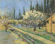 Orchard in Blossom,Bordered by Cypresses (nn04)