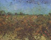 The Green Vineyard (nn04), Vincent Van Gogh