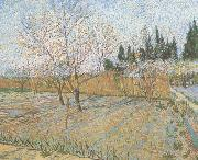 Orchard with Peach Trees in Blossom (nn04)
