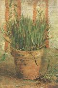 Flowerpot with Chives (nn04), Vincent Van Gogh