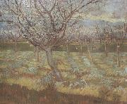 Apricot Trees in Blossom (nn04), Vincent Van Gogh
