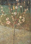 Almond Tree in Blossom (nn04), Vincent Van Gogh