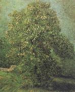 Chestnut Tree in Blosson (nn04), Vincent Van Gogh