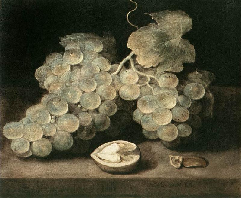 ES, Jacob van Grape with Walnut d