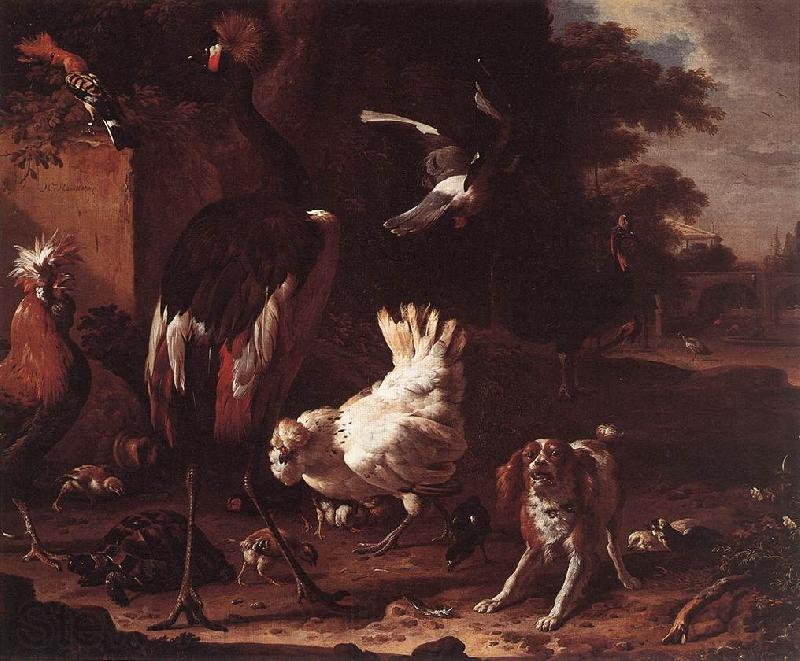 HONDECOETER, Melchior d Birds and a Spaniel in a Garden sf