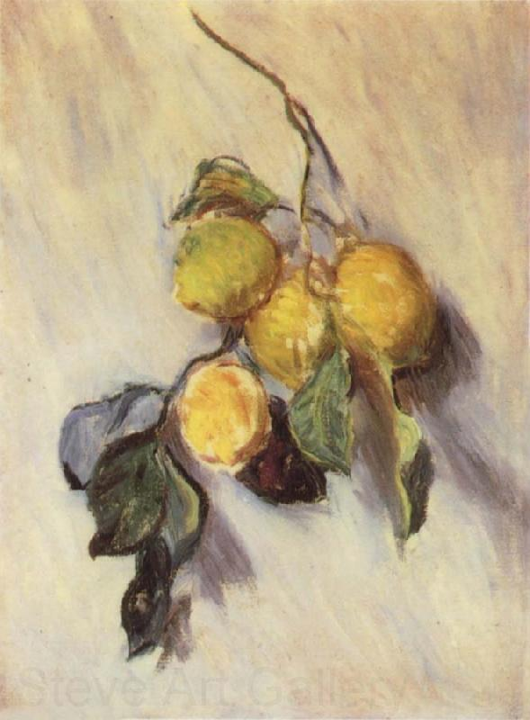 Claude Monet Branch from a Lemon Tree