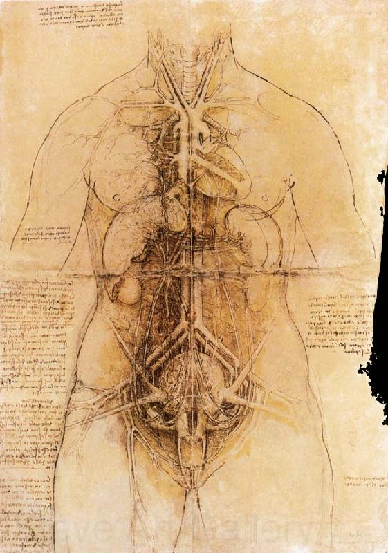 LEONARDO da Vinci The organs of the woman