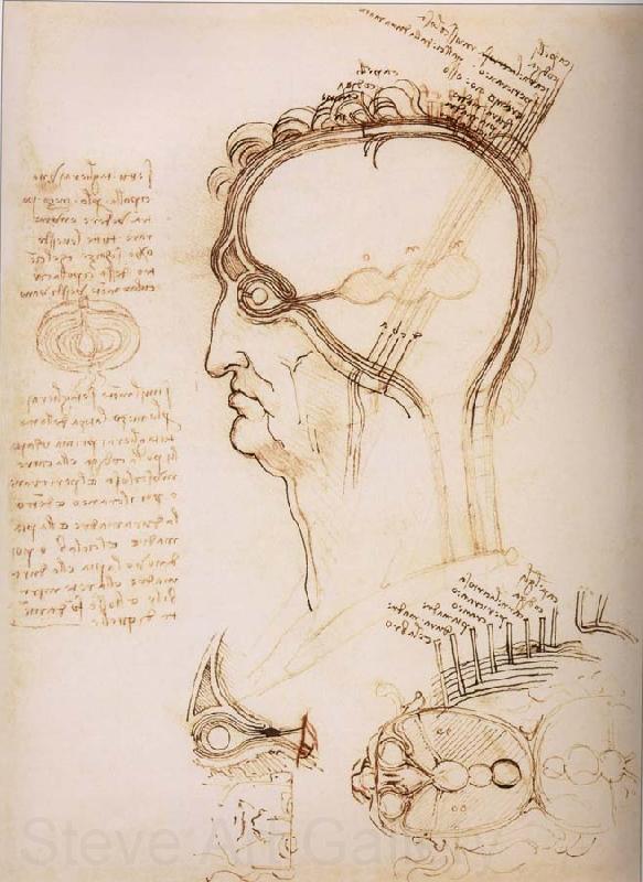 Anatomical study of the brain and the scalp LEONARDO da ...