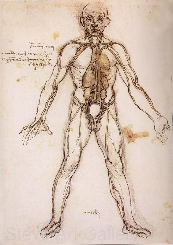 38537 You Branching Of The Blutgefabe Anatomical Figure With