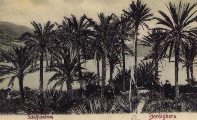 Pierre Renoir View of Bordighera:the Palms Postcard