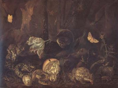 SCHRIECK, Otto Marseus van Still Life with Insects and Amphibians (mk14)
