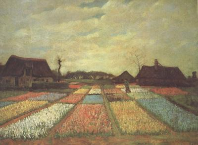 Vincent Van Gogh Bulb Fields (nn04)