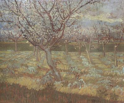 Vincent Van Gogh Apricot Trees in Blossom (nn04)