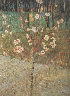 Vincent Van Gogh Almond Tree in Blossom (nn04)